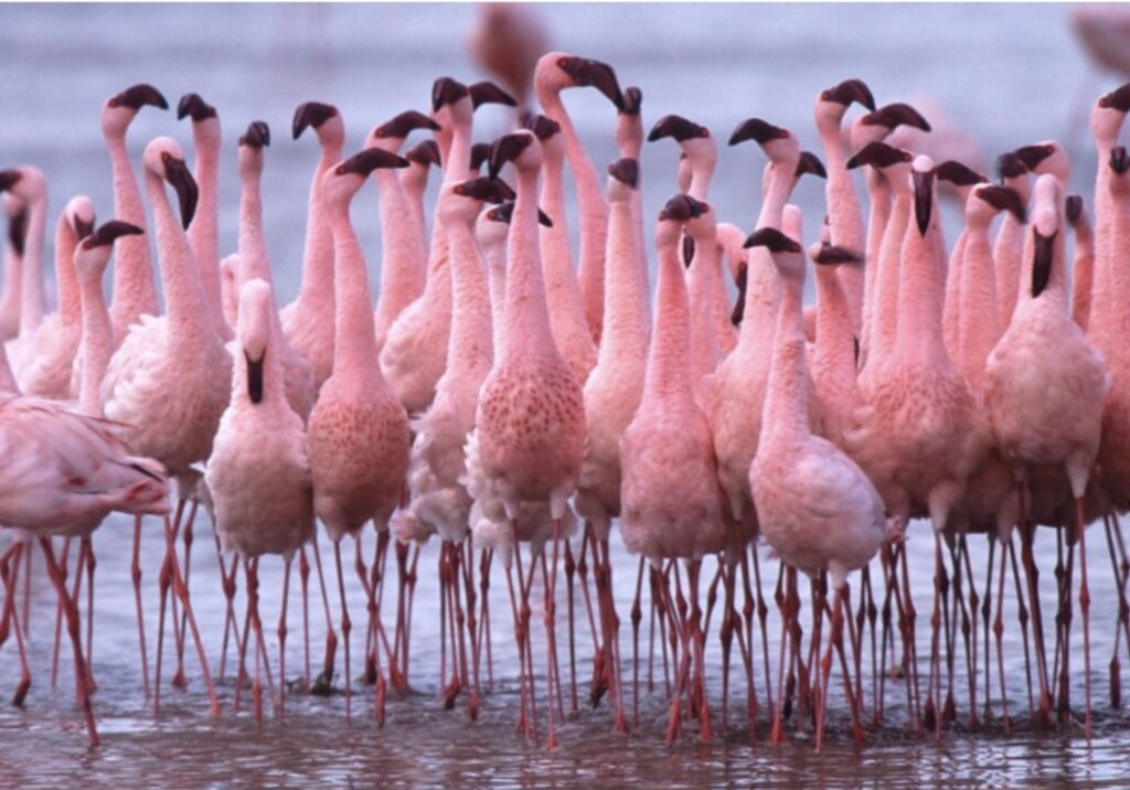 Lac natron animaux